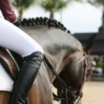 Quand faut-il contacter un vétérinaire pour votre cheval ?